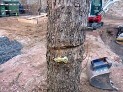 Baum angesägt